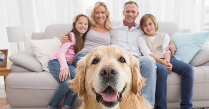 100%NL Magazine Hond en Baasje