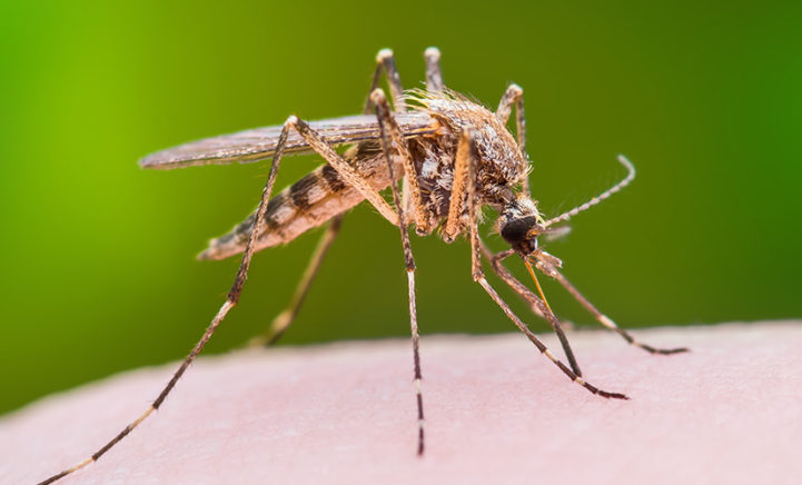 OH NEE: er is een muggenplaag in aantocht!