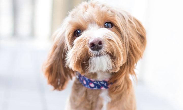 Hondeneigenaren maken meer foto's van hun honden dan hun partners