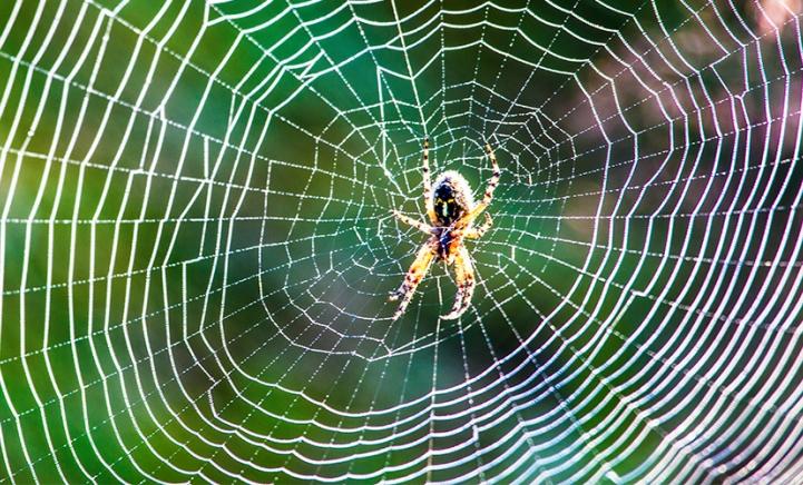Slecht nieuws: er is een spinnenplaag in aantocht!
