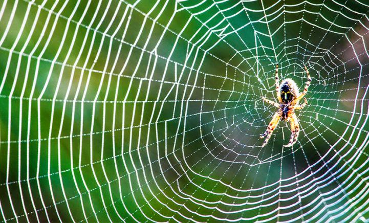 HANDIG: Met dit trucje ben je voor altijd van spinnen af!