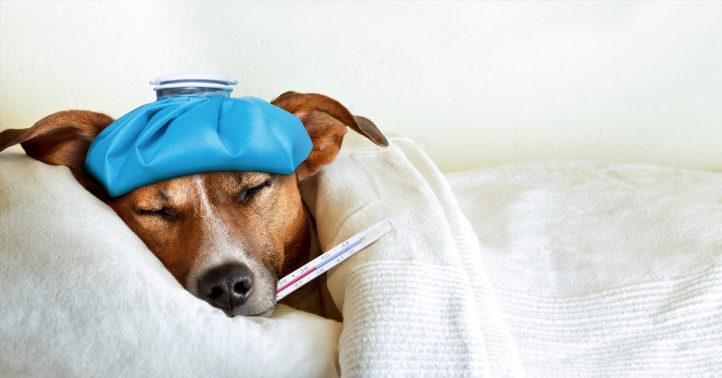 100%NL Magazine zieke hond