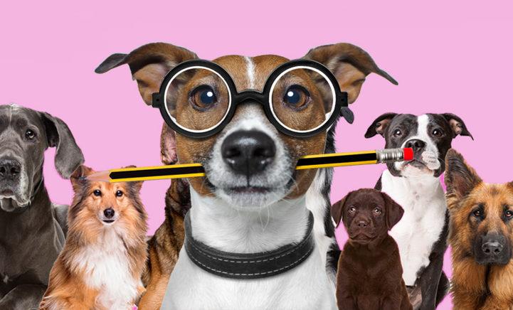 Woef! Dit zijn de 7 slimste hondensoorten