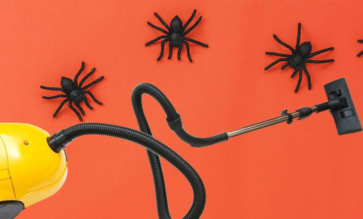Zo lang kan een spin overleven in je stofzuigerzak