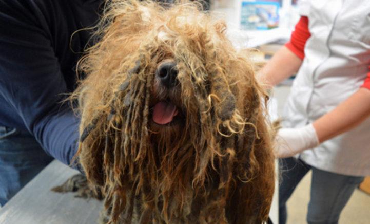 Video: geredde hond onherkenbaar na metamorfose!