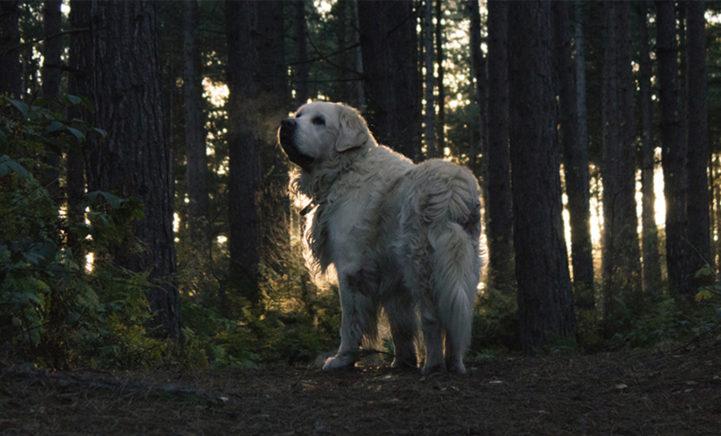 Val op in het donker met deze lichtgevende halsbanden voor je hond!