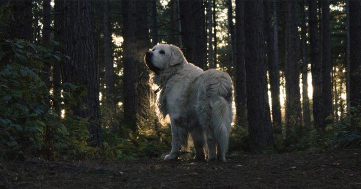 100%nl magazine hond donker