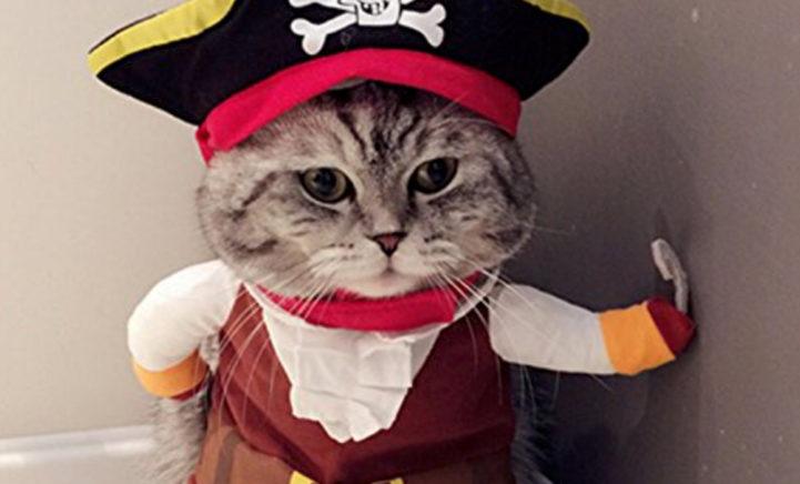 Te schattig! Er bestaan Halloween-outfits voor je kat