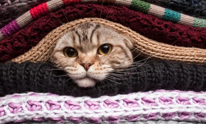 HEBBEN: een trui voor jou & je kat ineen!