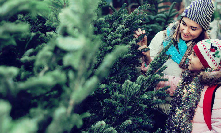 WAT! Zoveel beestjes schuilen er in jouw kerstboom.