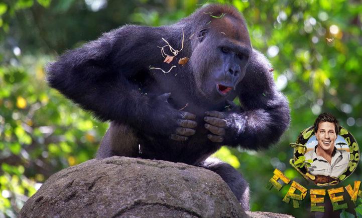 Je kunt jezelf nu wassen met gorillasnot van Freek Vonk!