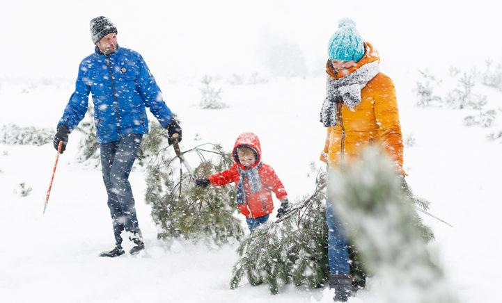Zaag je eigen kerstboom in Het Nationale Park De Hoge Veluwe!