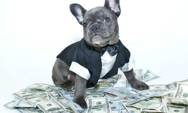Dit zijn de 5 rijkste huisdieren ter wereld!