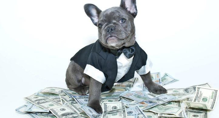 100%NL Magazine hond rijk