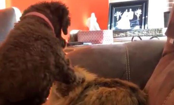 Deze video van een kat en hond die knuffelen moet je even zien!