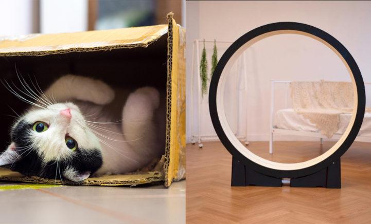 Kat te dik? Dit bijzondere apparaat helpt jouw kat met afvallen!