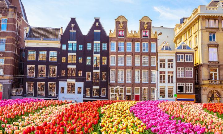 WOW! Pluk je eigen tulpen op de Dam in Amsterdam