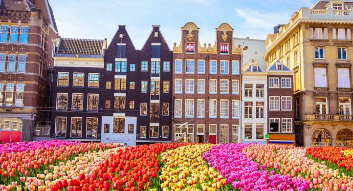 100%NL Magazine tulpen amsterdam