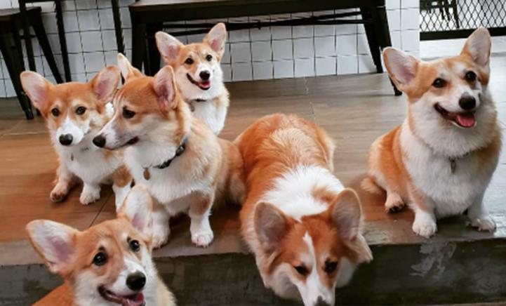 OMG: in dit café kan je met 12 honden knuffelen!