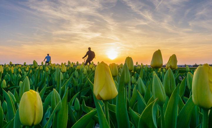 Leuke lente-uitjes: evenementen tussen de tulpen!