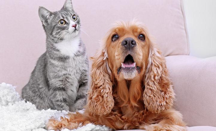Wij zochten het uit: zijn honden- of kattenmensen gelukkiger?