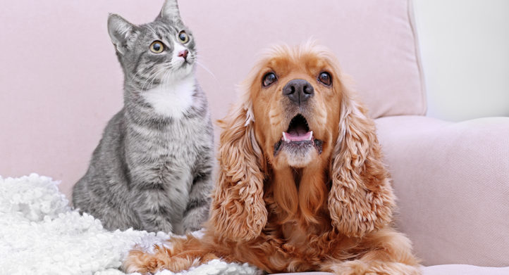 100%NL Magazine hond en kat