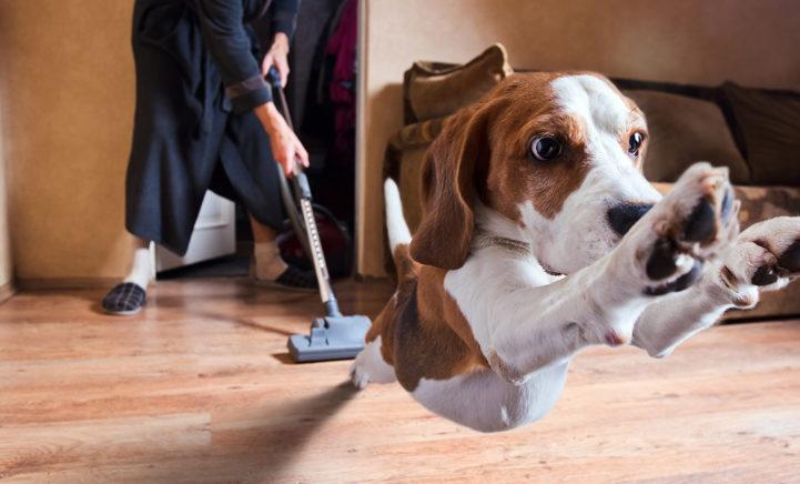 AHA! Dit is dus waarom je hond zo bang is voor de stofzuiger