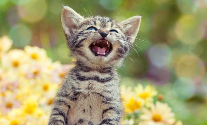 OOOH! Dit probeert je kat dus te zeggen als hij naar je miauwt