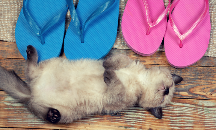 DIT WIL JE HEBBEN: een katten bikini (voor jezelf!)