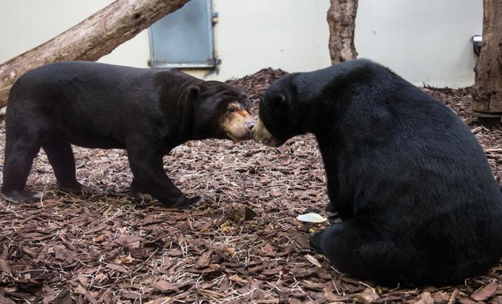 BIJZONDER: Beschuit met muisjes in Burgers' Zoo!