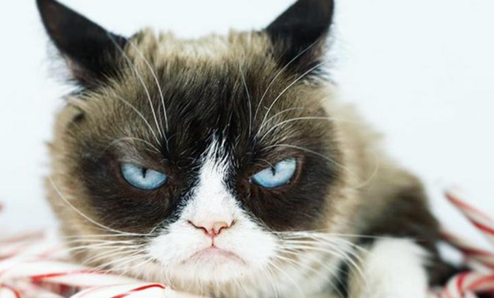Aawh! Grumpy Cat is overleden