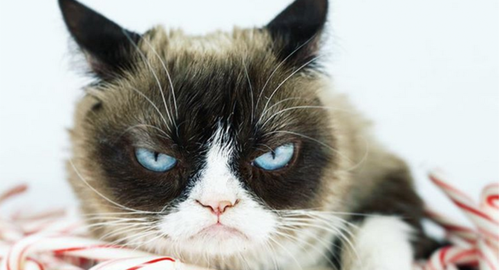 100%NL magazine grumpy cat