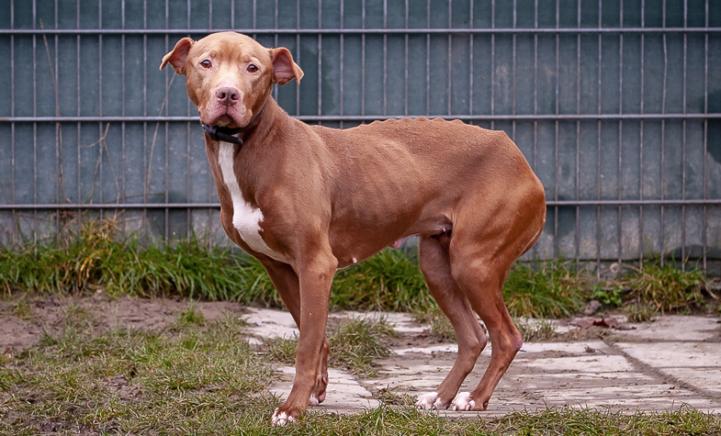 Hond Saar werd net op tijd gered