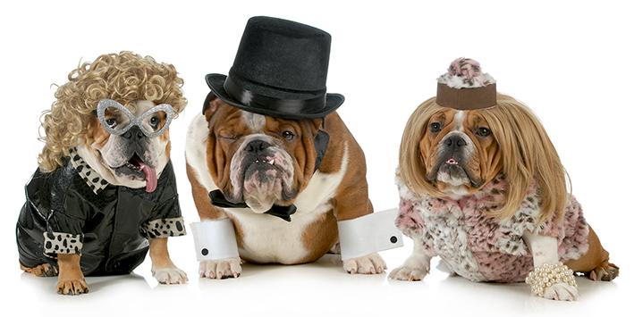 En de award voor lelijkste hond ter wereld gaat naar ....
