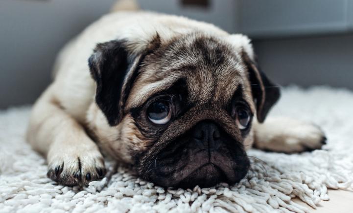Zo zit dat dus: Hierdoor kijken honden éxtra zielig!