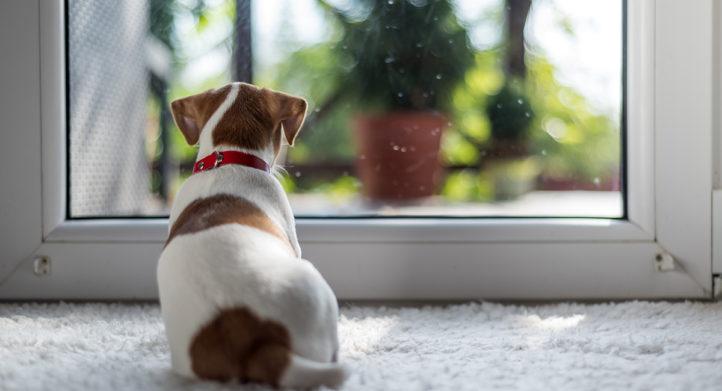 Mist je huisdier je als je op vakantie bent?