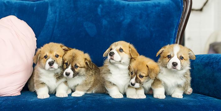 BEWEZEN: je wordt een gelukkiger mens van een hond!