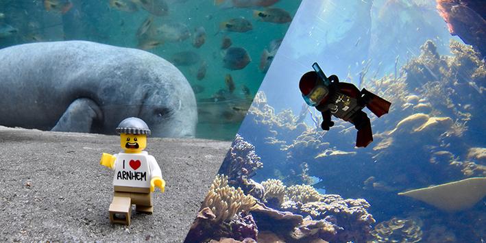 ZIEN: LEGO-fotograaf schiet té leuke plaatjes in Burgers' Zoo!