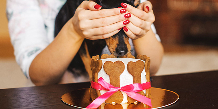 9 tips om jouw huisdier éxtra te verwennen!