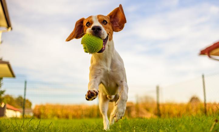 Op déze manieren maak jij je hond dolgelukkig!