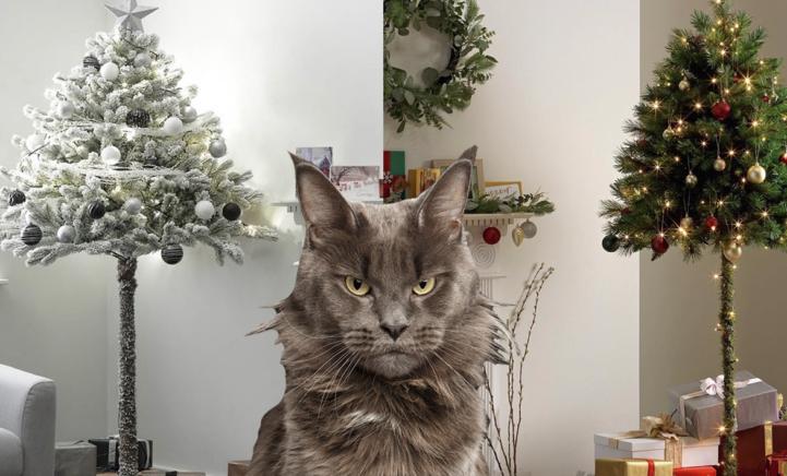 KERSTTREND: de halve kerstboom als oplossing voor ondeugende katten!