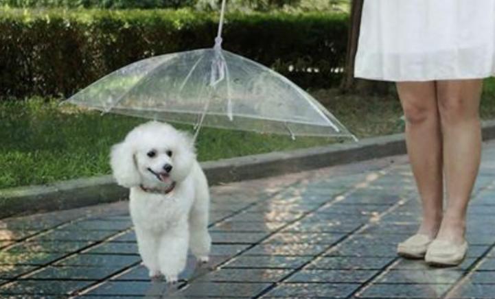 HEBBEN! Er bestaat een paraplu voor jouw hond!