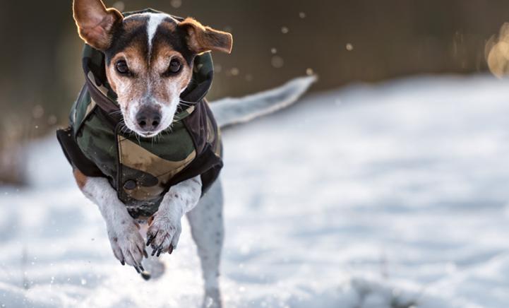 Wist jij dit? Dít is wanneer je hond een jas nodig heeft!