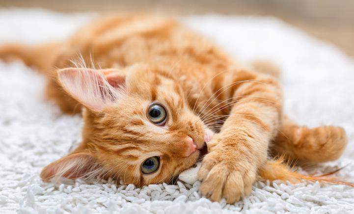 Dit zijn de populairste kattennamen van 2019!