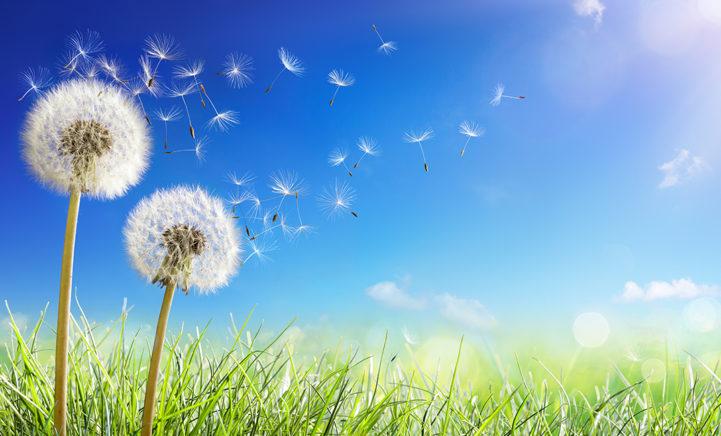 Valt de lente vroeg dit jaar? Warmterecords sneuvelen deze week!