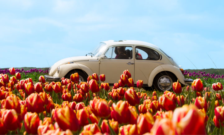 UITJE: Ontdek de grote bloemenzee in de Kop van Noord-Holland!