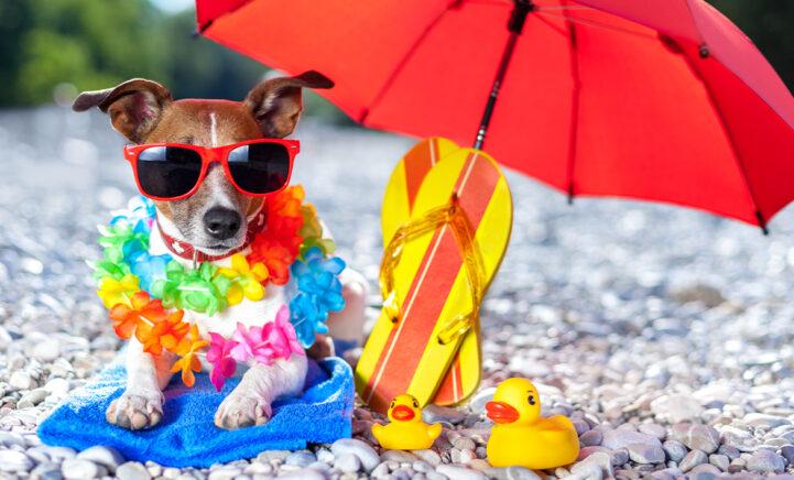 WIN: Maak voor je huisdier een zomerparadijs en maak kans op een minivakantie!