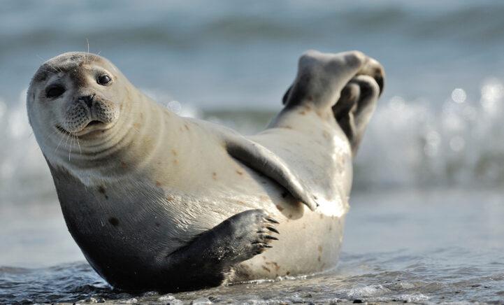 Ga naar het wad: van wadlooptochten tot schattige zeehonden spotten!