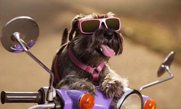 Is jouw huisdier ook zo talentvol? Deel het en maak kans op 1000 euro shoptegoed!