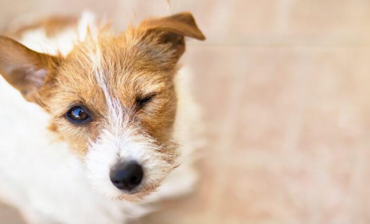 HEBBEN: Mensen geven massaal dít bijzondere cadeau aan hun huisdier!